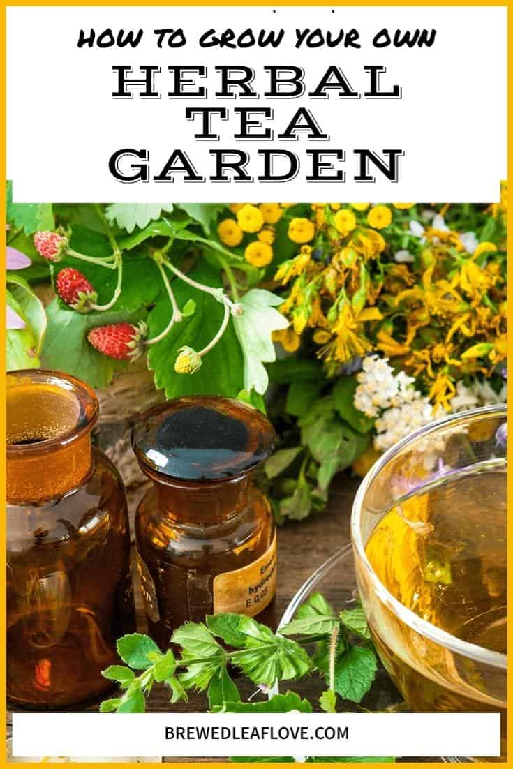 herbal tea garden plants, apothecary jars and a cup of tea in a glass cup and saucer.