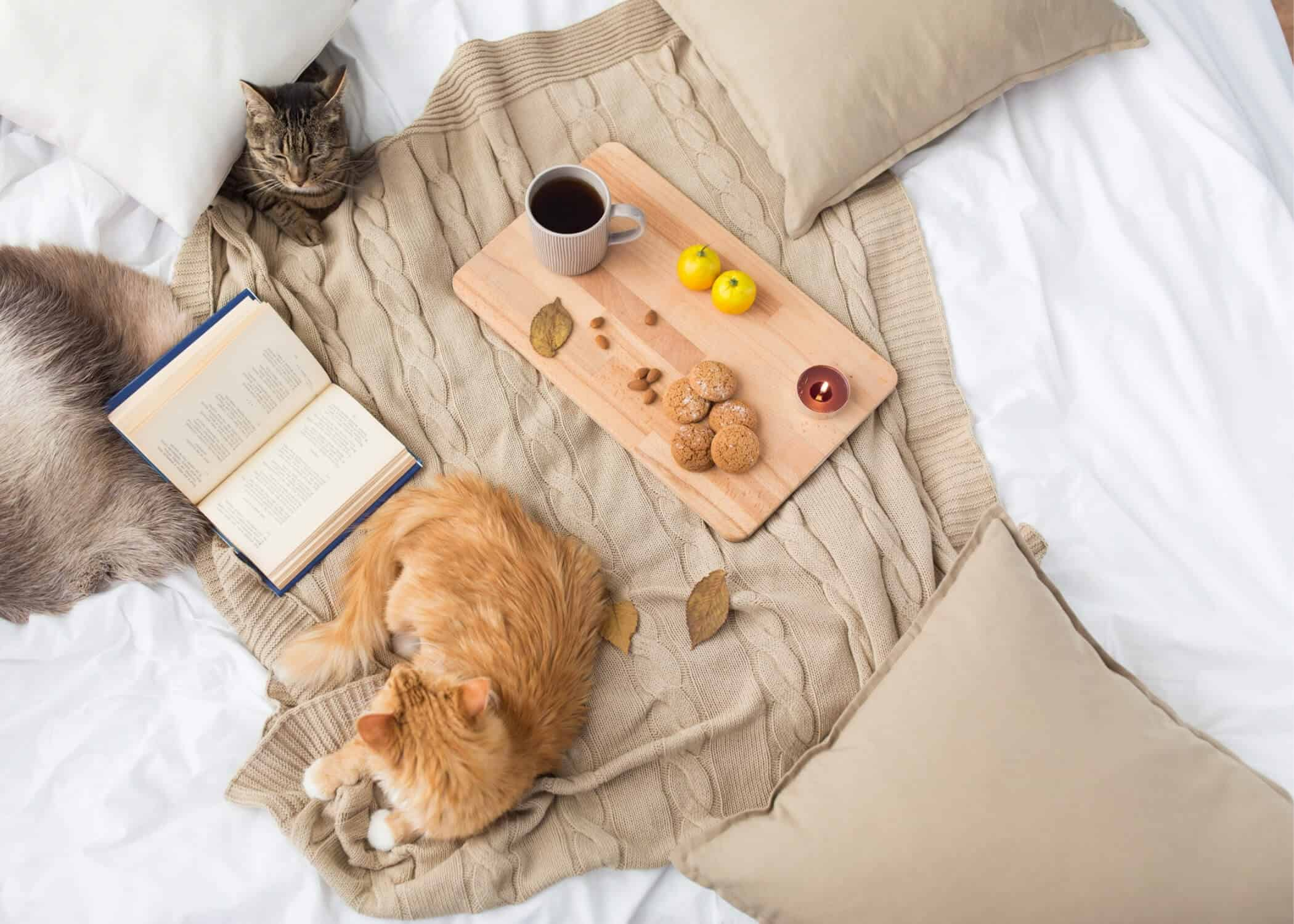 Cats on a bed with an open book and green tea.