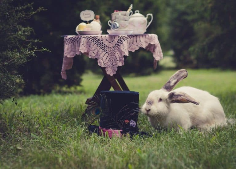 Rabbit and top hat on the grass in front of a table set for a tea party. Is a hat tea party attire?