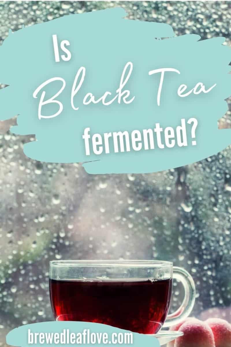 is black tea fermented?  glass tea cup with black tea in front of a rainy window