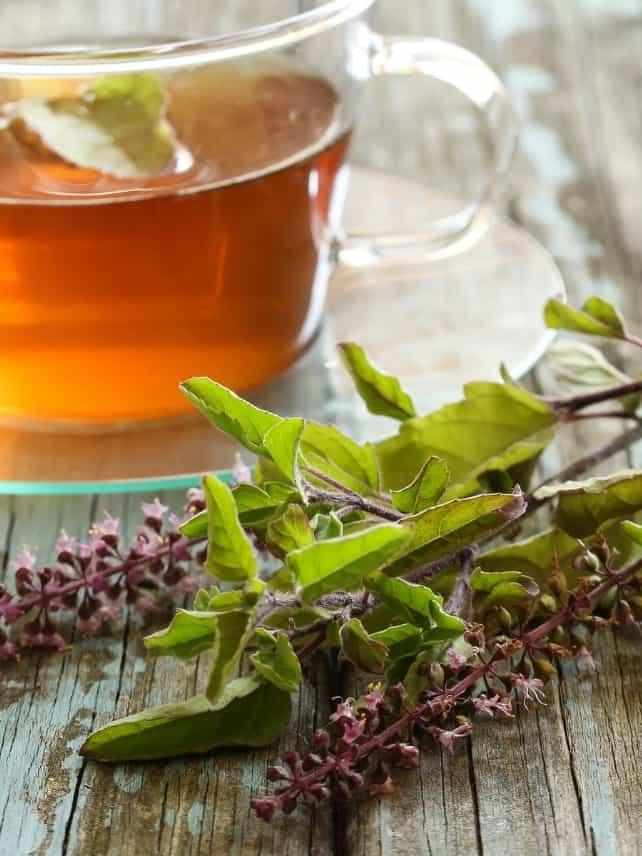 what is tulsi tea