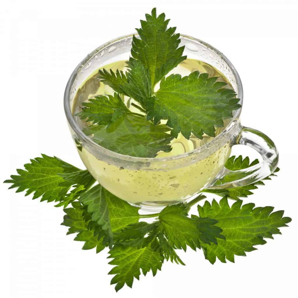 nettle tea for low thyroid issues
