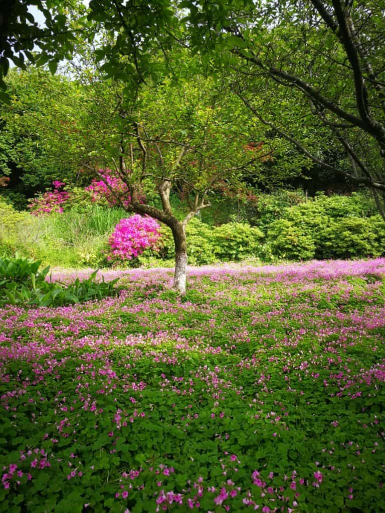 Garden photo of plants that love tea leaves and acidic soil