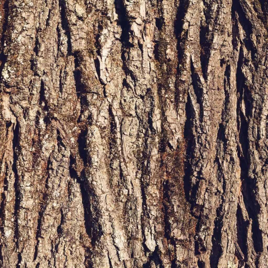 bark from Palo Azul
