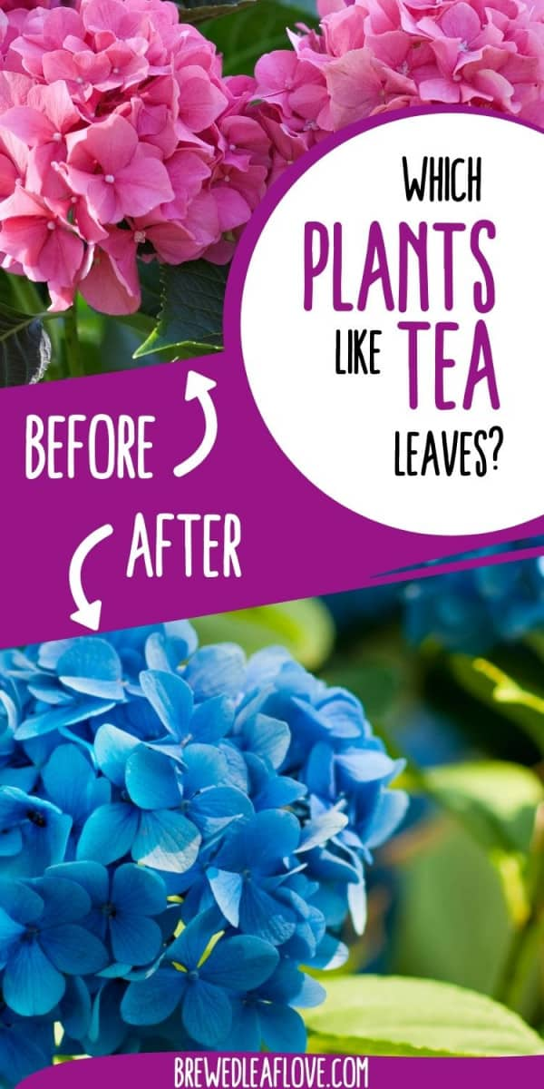 which plants like tea leaves graphic